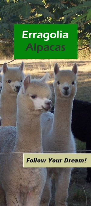 Alpacas at Erragolia Alpacas