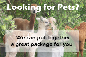 Alpacas - Pets - Packages - Contact Us